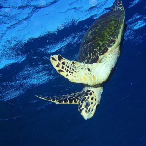 Turtle on fly_web.jpg