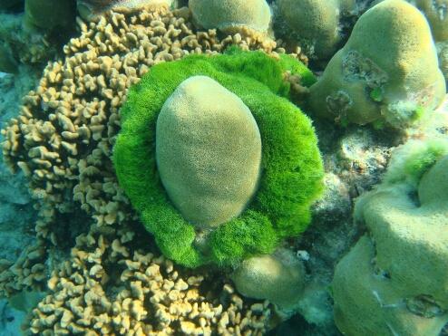Коралл.jpg