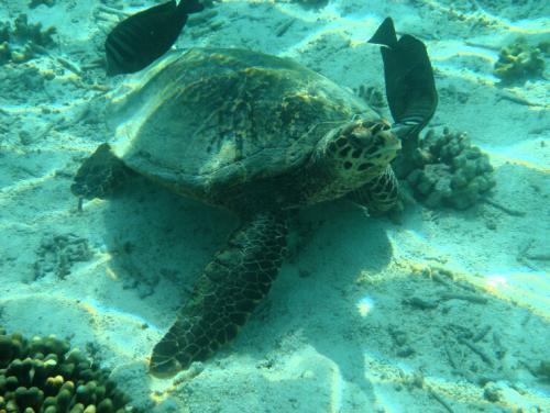 Черепаха в СПА салоне.jpg