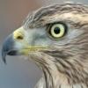 что за птица - последнее сообщение от Олег73